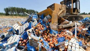 Россия за пять лет уничтожила более 36 тыс. тонн санкционных продуктов