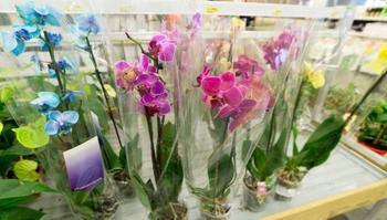 Главный секрет покупки здоровой орхидеи