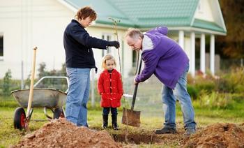 Посадка яблони: как правильно посадить саженец осенью и весной