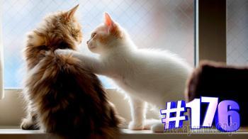 Смешные коты | Приколы с котами | Видео про котов | Котомания # 176