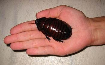 13 самых больших и удивительных насекомых