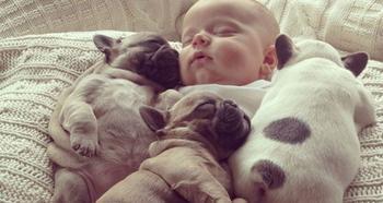 Милые щенки бульдогов, которые растопят ваше сердце