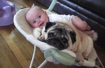 Вот почему собак называют лучшими друзьями человека