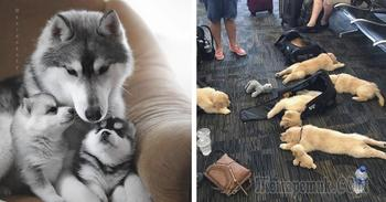 Забавные фото животных-родителей, которых распирает от счастья