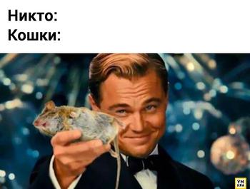 17 смешных мемов с кошками, которые как нельзя лучше передают их придурковатую натуру