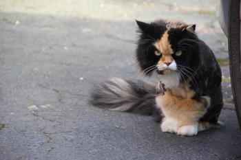 Несколько котов, устрашающие одним своим взглядом