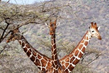 12 самых смешных и нелепых фото дикой природы