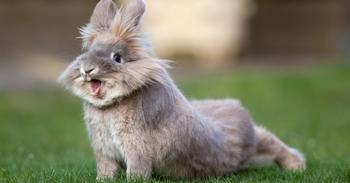 Гороскоп для кролика на 2018 год по знакам зодиака