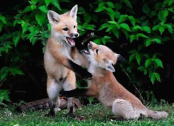 Красивые и редкие животные