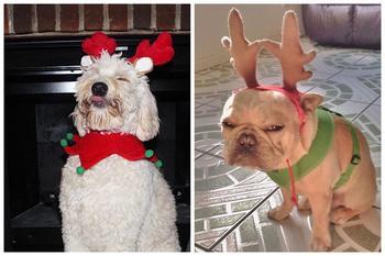 20 животных, которые ненавидят Новый год и все, что с ним связано