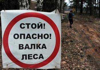В правительстве предложили сдать российский лес в аренду на 99 лет