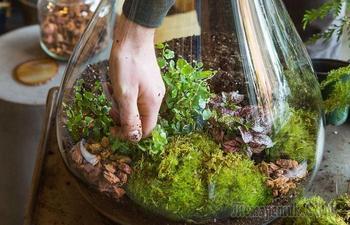 6 практических советов для создания сада в бутылке