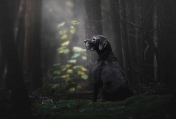 Победители фотоконкурса Dog Photographer