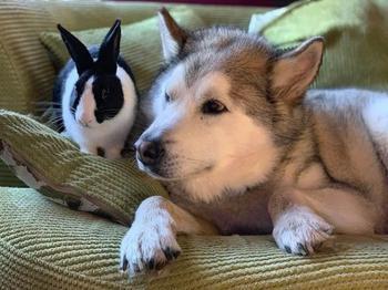 Животные дружат между собой, не обращая внимания ни на какие правила