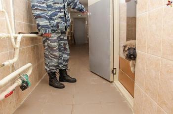Один день из жизни полицейских щенков в Перми