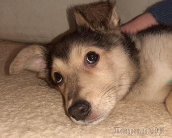 Игривый маленький щенок в добрые руки