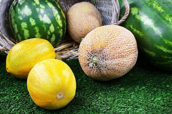 Чем подкормить дыни и арбузы, желтеют листья?