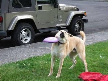 20 смешных собак, пожалевших о принятом решении