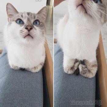 19 кошек, которые больше похожи на пушистые буханки, чем на домашних питомцев