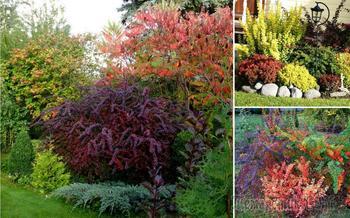 8 правил использования растений с цветными листьями в дизайне сада