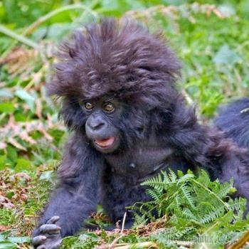 Как изумляются животные - 45 эмоциональных фото