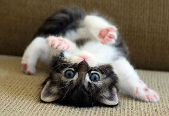20 самых милых котят на свете