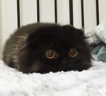 Когда думаешь, что растрогать тебя невозможно, вдруг видишь фото этих котят