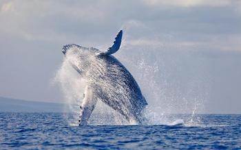 10 секретов живой природы, которые пока ставят учёных в тупик