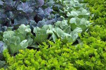 Уплотненные посадки в теплице: формируем удачное соседство овощей