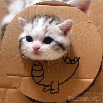 20 глупых рисунков кошек из мемов