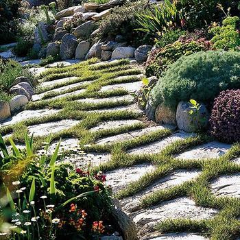 Зеленые садовые дорожки
