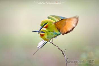 Потрясающие фотографии птиц от Mommam Tripleseven