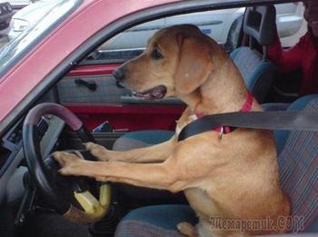 Смешные самостоятельные собаки, которым не нужен хозяин