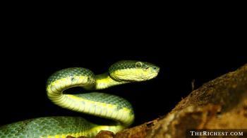 Очень пугающие факты о змеях, которые лучше не знать