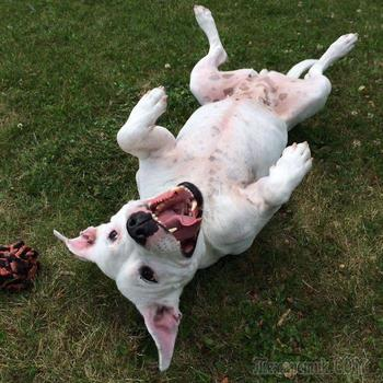 Собаки, фотогеничность которых просто зашкаливает