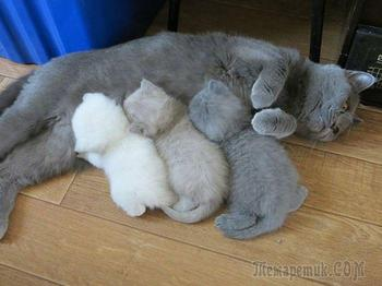 Гордые мамы-кошки со своими многочисленными котятами
