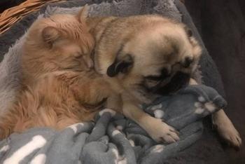 Пост о любви между собаками и кошками