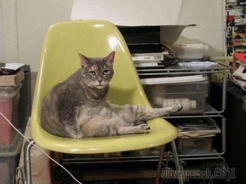 Довольные коты проекта «Cats love Eames!»