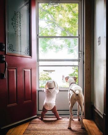 Дружба маленького мальчика и собаки, которая перестала доверять людям