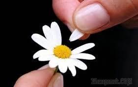 «Лепестки ромашки - ирония промашки» (Стих)