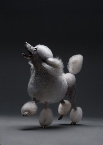 Индивидуальность собак в портретах фотографа Александра Хохлова