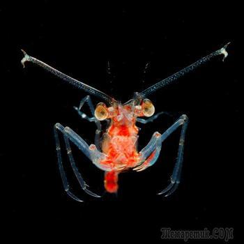 Японский фотограф Рю Минемицу и его «Драгоценности в ночном море»