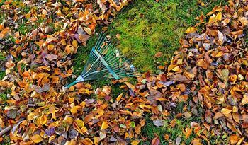 Календарь дачника ноябрь: работы в саду