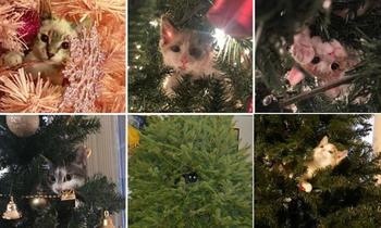 Эти коты подарят вам добрую порцию новогоднего настроения!