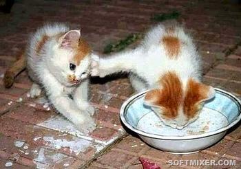 Кошки на Руси
