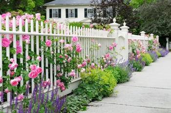Оформляем забор на даче