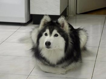 Талли – собака с душой кошки