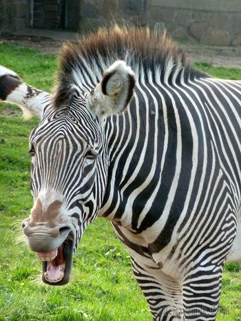 Жизнерадостные животные, при виде которых вы обязательно улыбнетесь