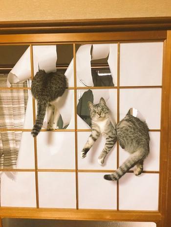Коты, которые плевать хотели на ваш авторитет
