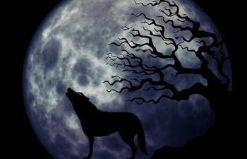 Почему волки воют на луну: легенды